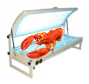 //www.notanothercyclingforum.net/pics/lobsterbed.jpg)